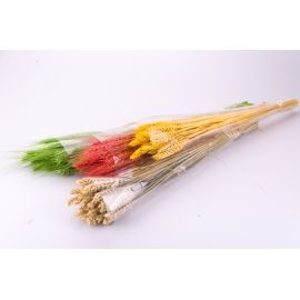 Colored spikelets in a beam
