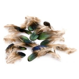 Exotic (green) feathers in a pack