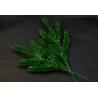 Spruce branch green 5