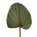 Стабілізоване листя рогозу