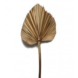Стабілізоване листя рогозу золоте