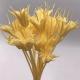 Квітка стабілізованого восьмикутника