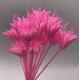 Цветок стабилизированного восьмиугольника