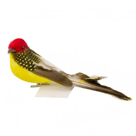 Птичка желтая
