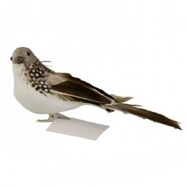 Птичка серая