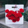 Пакет паперовий для квітів AXSTH Білий