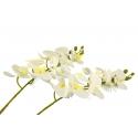 Ветка Орхидеи Белая