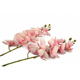 Гілка Орхідеї Рожева