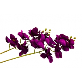 Гілка Орхідеї Фіолетова