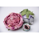 The heads of purple peony flowers