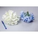 Головки квітів гортензії білі