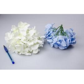 Головки цветов гортензии белые