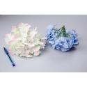 Головки цветов гортензии белые с розовым