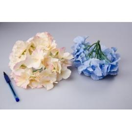 Головки цветов гортензии беж