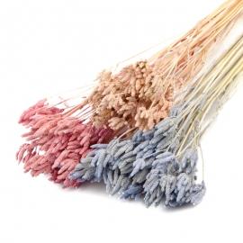 Сухоцвет Вербена цветная в пачках