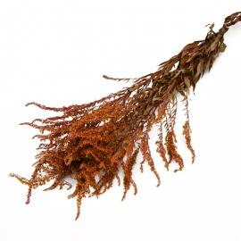 Сухоцвіт Солідаго (золотарник) кольоровий в пачках