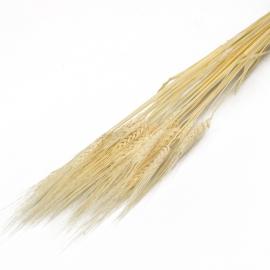 Сухоцвіт Пшениця вибілена міні в пачках