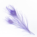 Пір'я павича фіолетове
