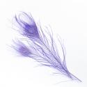Перья павлина фиолетовое