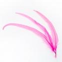 Перья петуха розовое