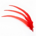 Rooster feathers are red