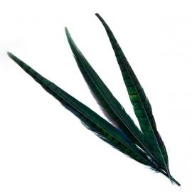Перья фазана зеленые