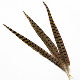 Пір'я фазана натуральне
