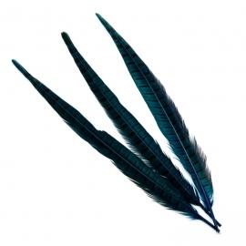Перья фазана синее
