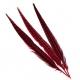 Перья фазана красное