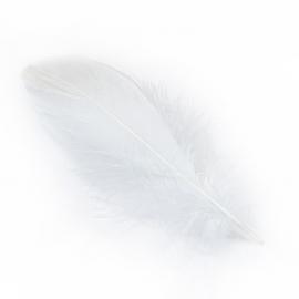 Пір'я гусине біле