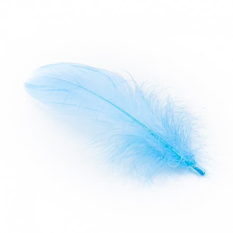 Blue goose feathers