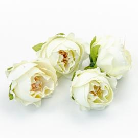 Головки цветов роза пионовидна белая