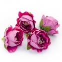Головки квітів троянда піоновидна лілова