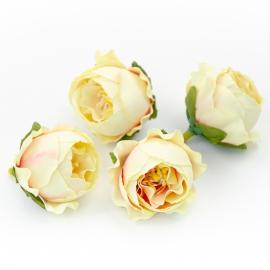 Головки цветов роза пионовидная молочная