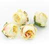 Головки квітів троянда піоновидна молочна