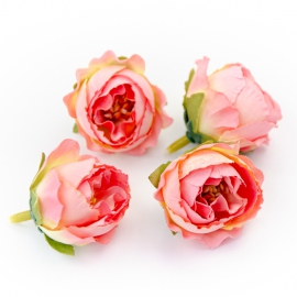 Головки цветов роза пионовидна розовая